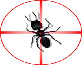 Traitement anti fourmis rabat for Anti fourmis dans la maison